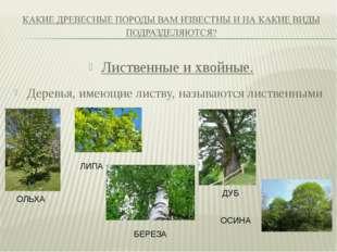 Лиственные и хвойные. Деревья, имеющие листву, называются лиственными ОЛЬХА Л