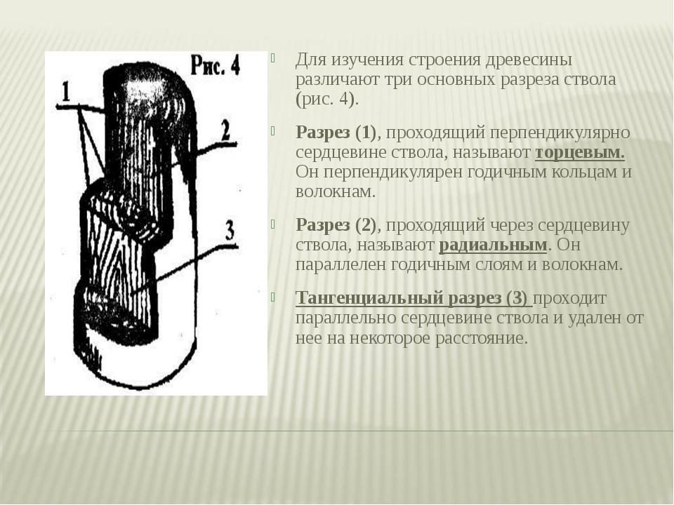 Для изучения строения древесины различают три основных разреза ствола (рис. 4...