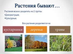 Растения можно разделить на 2 группы: Дикорастущие; Культурные. Растения быва