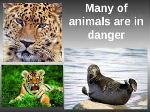 Many of animals are in danger