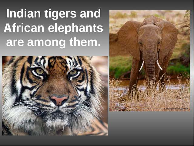 Indian tigers and African elephants are among them.