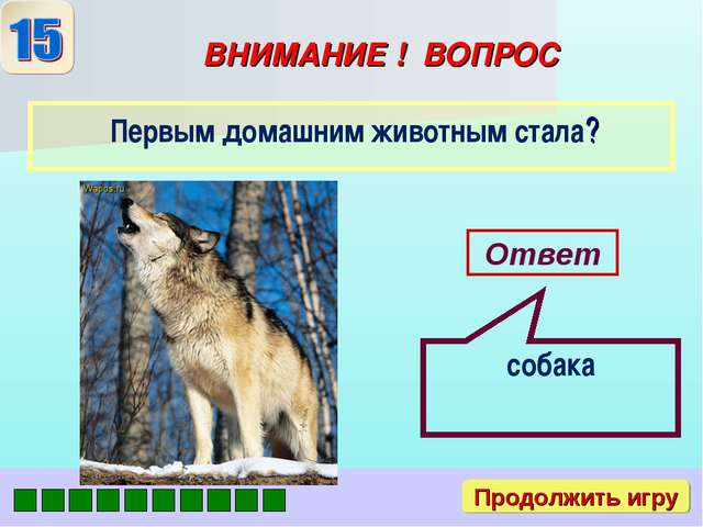 ВНИМАНИЕ ! ВОПРОС Первым домашним животным стала? Ответ собака Продолжить игру