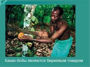Какао-бобы являются биржевым товаром