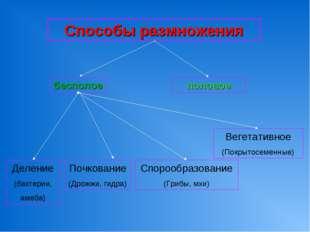 Способы размножения бесполое половое Деление (бактерии, амеба) Почкование (Др