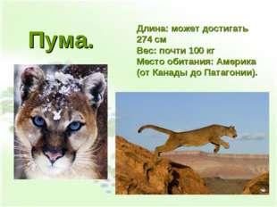 Длина: может достигать 274 см Вес: почти 100 кг Место обитания: Америка (от К