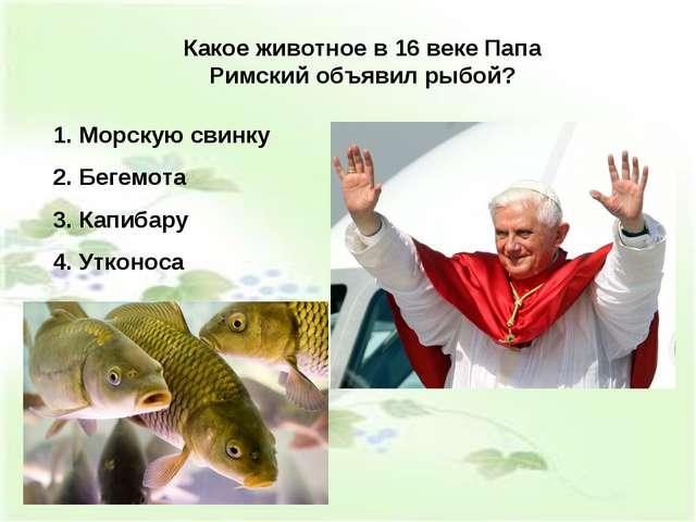 Какое животное в 16 веке Папа Римский объявил рыбой? Морскую свинку Бегемота...