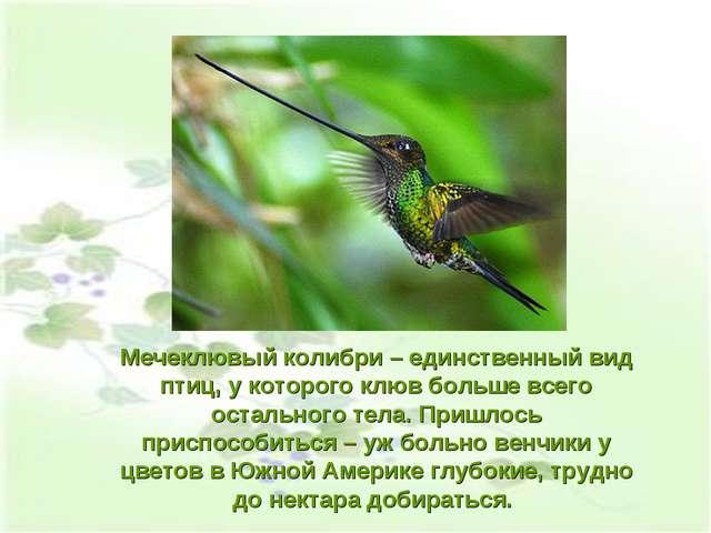 Мечеклювый колибри – единственный вид птиц, у которого клюв больше всего оста...