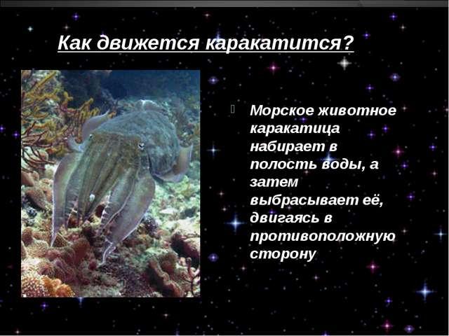 Как движется каракатится? Морское животное каракатица набирает в полость воды...