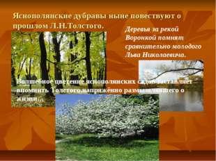 Яснополянские дубравы ныне повествуют о прошлом Л.Н.Толстого. Деревья за реко