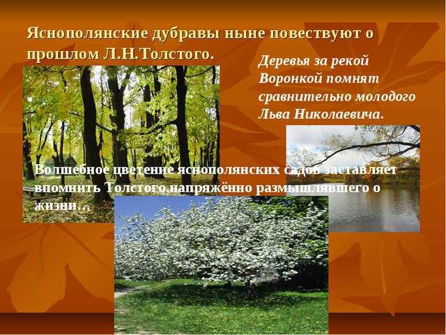 Яснополянские дубравы ныне повествуют о прошлом Л.Н.Толстого. Деревья за реко...