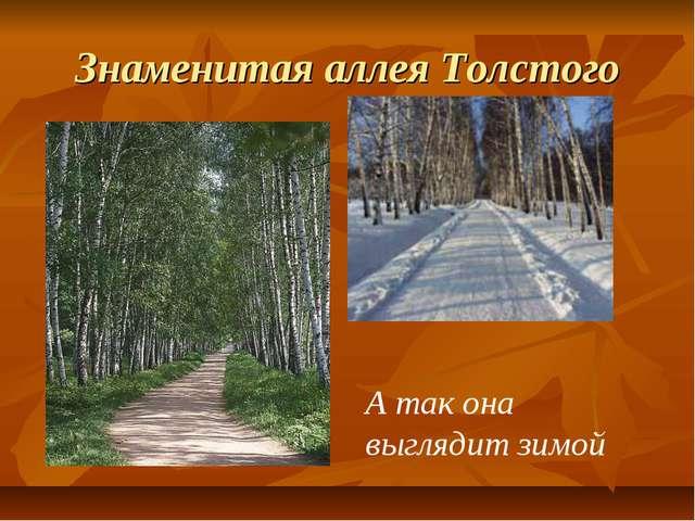 Знаменитая аллея Толстого А так она выглядит зимой