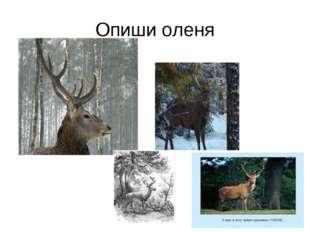 Опиши оленя
