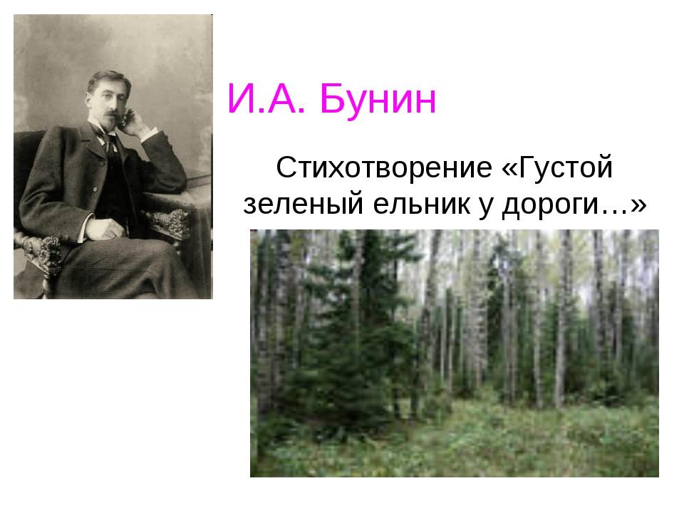 И.А. Бунин Стихотворение «Густой зеленый ельник у дороги…»