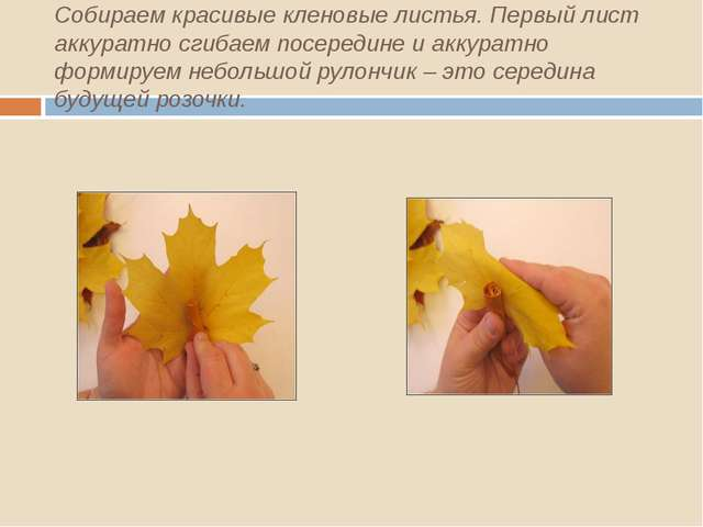 Собираем красивые кленовые листья. Первый лист аккуратно сгибаем посередине и...