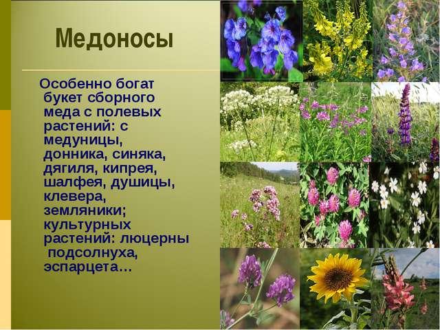 Медоносы Особенно богат букет сборного меда с полевых растений: с медуницы, д...