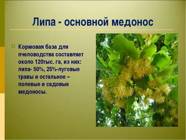 Липа - основной медонос Кормовая база для пчеловодства составляет около 120ты...
