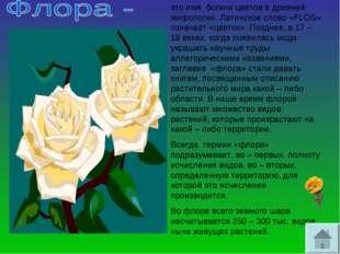 это имя богини цветов в древней мифологии. Латинское слово «FLOS» означает «ц