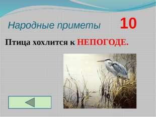 Народные приметы       10