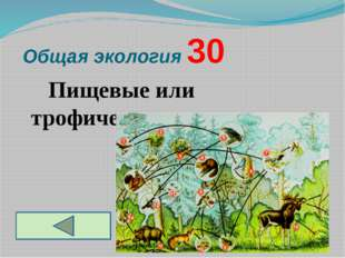 Общая экология 30 Пищевые или трофические сети