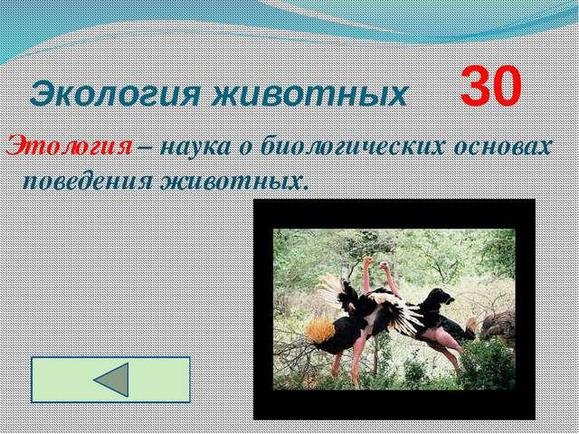 Экология животных     30 Этология – наука о биологических основах поведения ...