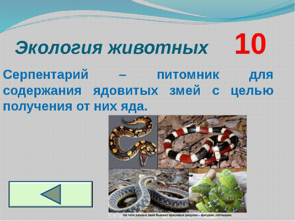 Экология животных     10