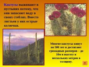 Кактусы выживают в пустынях потому, что они запасают воду в своих стеблях. Вм