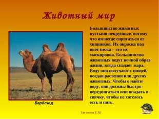 Животный мир Евгенова Е.М. Верблюд Большинство животных пустыни некрупные, по