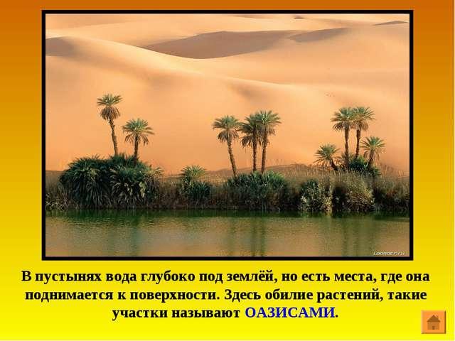 В пустынях вода глубоко под землёй, но есть места, где она поднимается к пове...