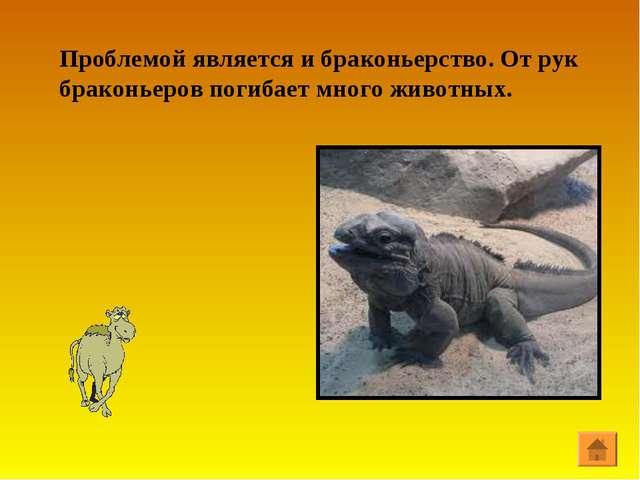 Проблемой является и браконьерство. От рук браконьеров погибает много животных.