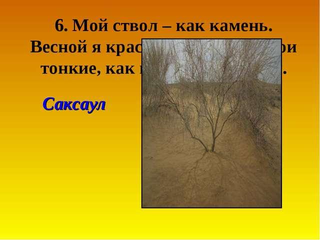 6. Мой ствол – как камень. Весной я красавец. А листья мои тонкие, как вязаль...