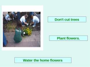Plant flowers. Don't cut trees Water the home flowers