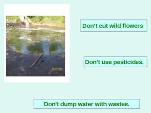 Don't use pesticides. Don't dump water with wastes. Don't cut wild flowers