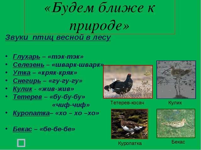 «Будем ближе к природе» Звуки птиц весной в лесу Глухарь – «тэк-тэк» Селезень...