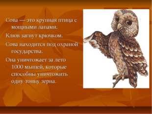 Сова — это крупная птица с мощными лапами. Клюв загнут крючком. Сова находитс