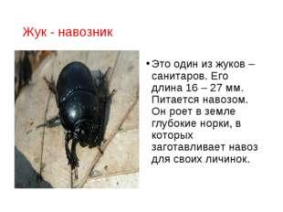 Жук - навозник Это один из жуков – санитаров. Его длина 16 – 27 мм. Питается