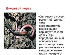 Дождевой червь Они живут в почве, рыхлят её. Длина тела представителей разных