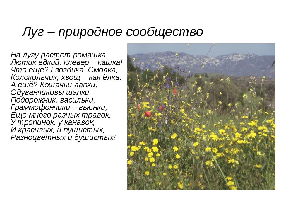 Луг – природное сообщество На лугу растёт ромашка, Лютик едкий, клевер – кашк...