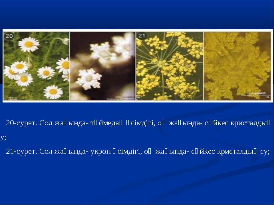 20-сурет. Сол жағында- түймедақ өсімдігі, оң жағында- сәйкес кристалдық су; 2...