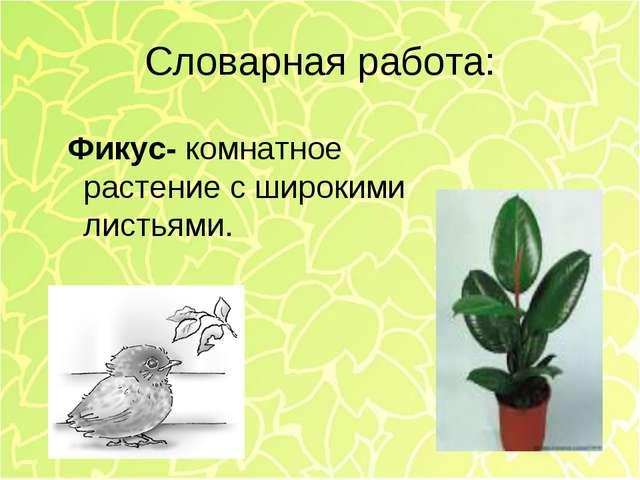 Словарная работа: Фикус- комнатное растение с широкими листьями.
