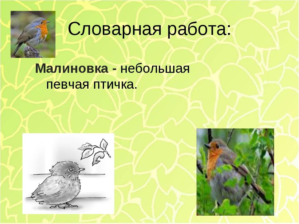 Словарная работа: Малиновка - небольшая певчая птичка.