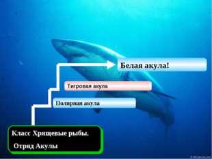 Класс Хрящевые рыбы. Отряд Акулы Тигровая акула Белая акула! Полярная акула