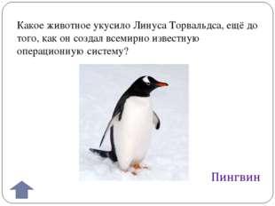 Какое животное укусило Линуса Торвальдса, ещё до того, как он создал всемирно