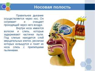 Правильное дыхание осуществляется через нос. Он согревает и очищает проходящ