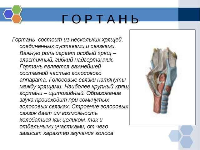 Г О Р Т А Н Ь Гортань состоит из нескольких хрящей, соединенных суставами и с...