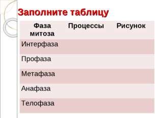 Заполните таблицу Фаза митозаПроцессы Рисунок Интерфаза Профаза  Метафа