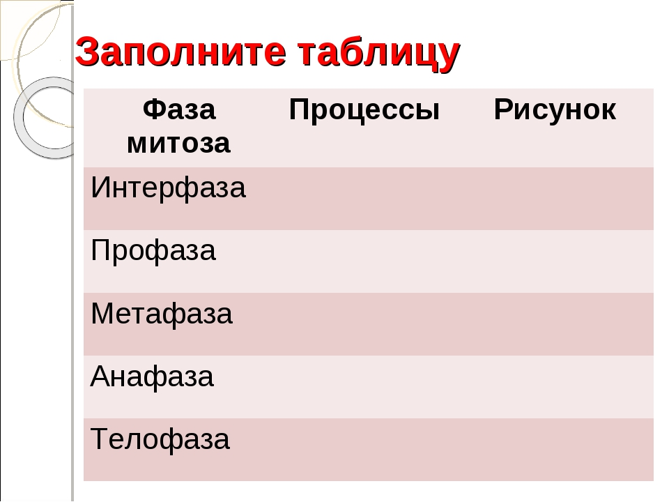 Заполните таблицу Фаза митозаПроцессы Рисунок Интерфаза Профаза  Метафа...