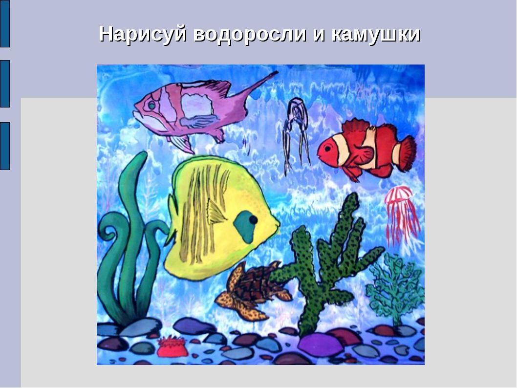 Нарисуй водоросли и камушки