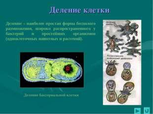 Деление бактериальной клетки Деление клетки Деление – наиболее простая форма
