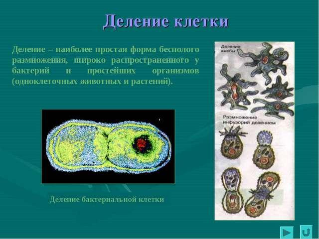 Деление бактериальной клетки Деление клетки Деление – наиболее простая форма...