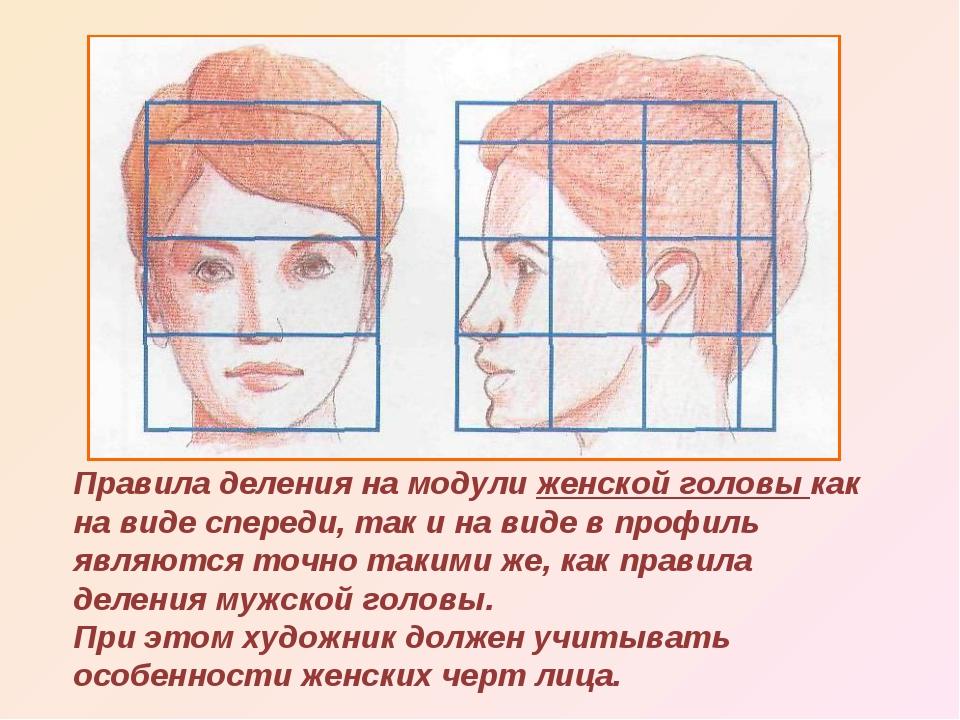 Правила деления на модули женской головы как на виде спереди, так и на виде в...